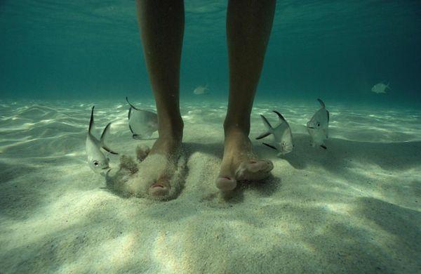 david-doubilet.o-fotografos-tou-ipobrixiou-kosmouadult-palometa-fish-dog-the-steps-ingolden.gr_