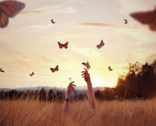 ekso-i-stenoxoria-butterflies-field-girl-hands-ingilden.gr_