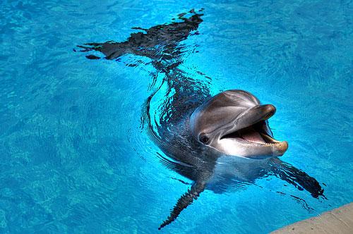 attiko-zoologiko-parko-delfinia-ingolden.gr