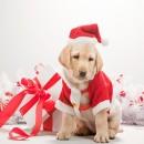 Χριστουγεννιάτικη Αγάπη από τα ζωάκια της Φιλοζωικής! Η Ελίνα Μπούνια στο InGolnden