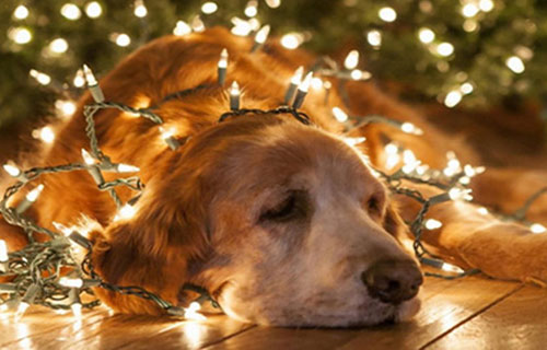 dogs_christmas_lights_elina-bounia-ingolden.gr