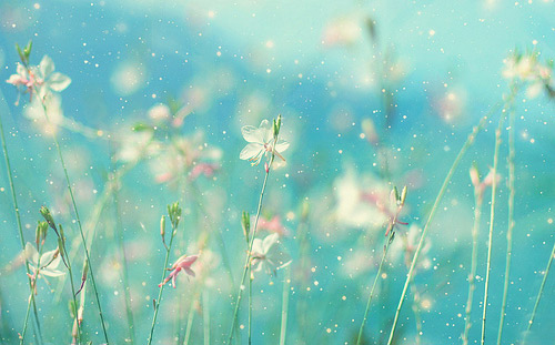 Markes-Gabriel-Garsia-flowers-life-ingolden.gr.jpg500