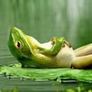 Ο κουφός βάτραχος…