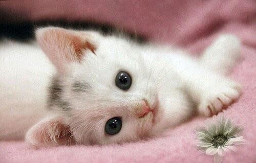 cat-cute-dog-flowers-ingolden.gr