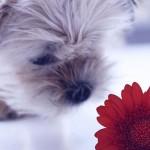 4 Οκτώβρη, Παγκόσμια Ημέρα των Ζώων