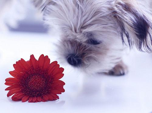 dog-cat-flower-animal-ingolden.gr
