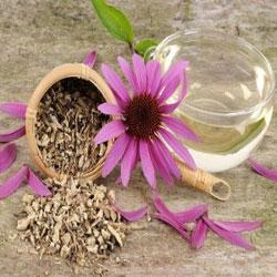Echinacea-Tea-ingolden.gr