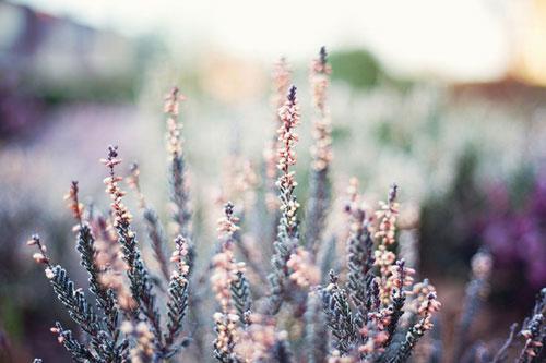pharakeio-tis-fisis-gia-paidia-beautiful-flower-lavender-life-ingolden.gr