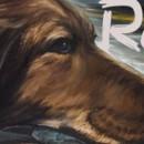 Roxy, μια ταινία μικρού μήκους για τα αδέσποτα ζώα