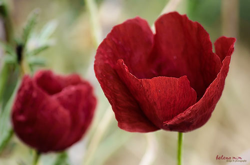 ouloudia-ti-symvolizoun-ingolden.gr-paparounes-red