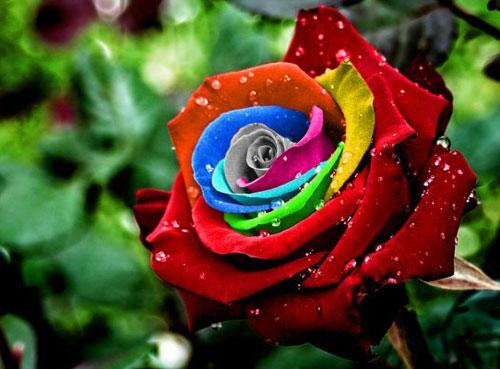 Λουλούδια, τι συμβολίζουν; | InGolden