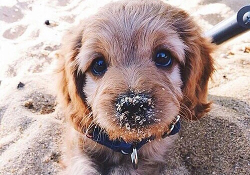 To-savoir-vivre-ths-paralias-sand-dog-sweet