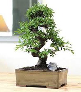 fyta-kai-louloudia-pou-fernoun-tyxh-bonsai-ingolden.gr