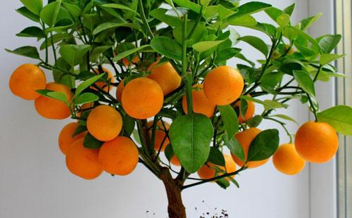 fyta-kai-louloudia-pou-fernoun-tyxh-portokalia-ingolden.gr