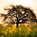 Το δέντρο της εκπλήρωσης των επιθυμιών