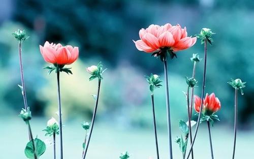 alitheia-kalosynh-xrisimotita-sokratis-flowers-red