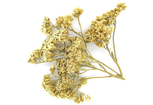 achillea-millefolium-votano-ingolden-gr