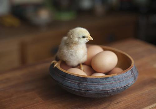 avga-gia-kathe-geystiko-gousto-ingolden.gr-eggs-kotopoulaki