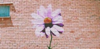 gkremise-ta-teixi-ingolden.gr-wall-flower-rose