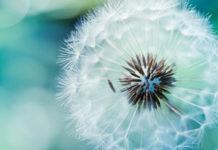 TI-ZOI-MAS-TI-FTIAXNOUME-INGOLDEN.GR-FLOWER-BLUE